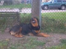 Roxie-2012