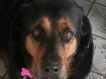 Roxie-Ruby