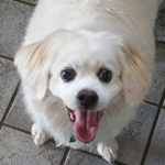 Buddy Senior Dog