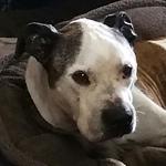 Senior Dog Charlie