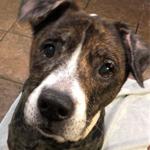 Senior Dog Sanctuary PA