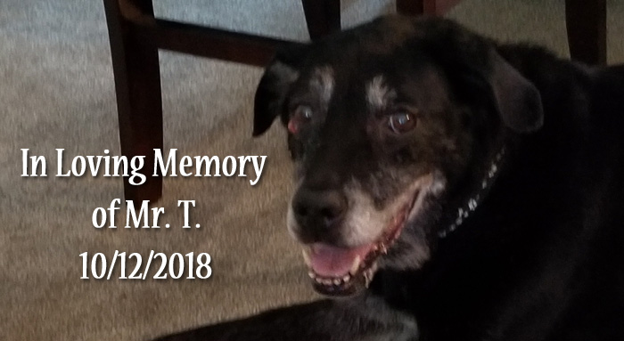 Sanctuary for Senior Dogs Pittsburgh