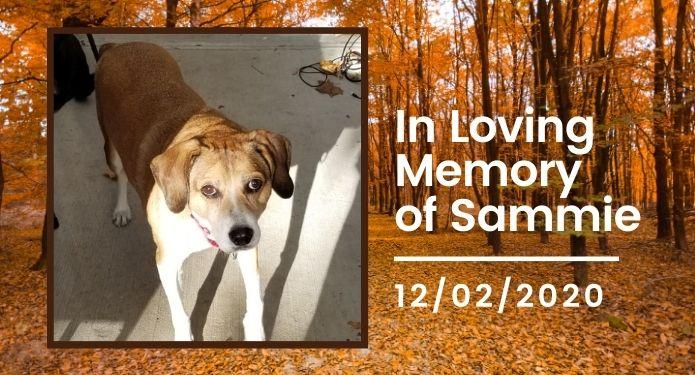 Sammie passed on December 2, 2020