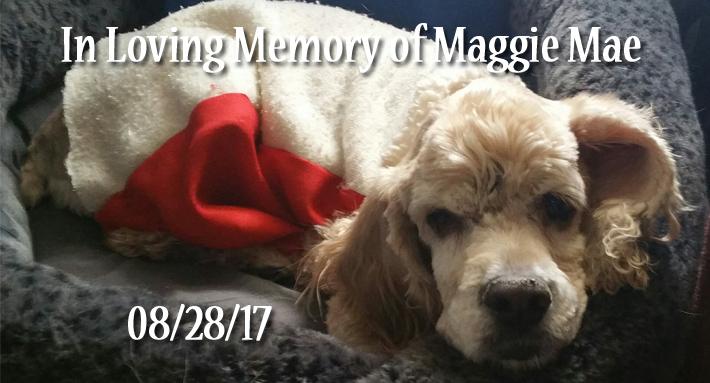 Senior Dog Memorial