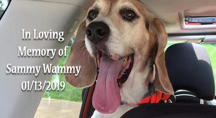 Sammy wammy senior dog slide