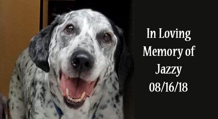 Senior Dog Jazzy Memory slide