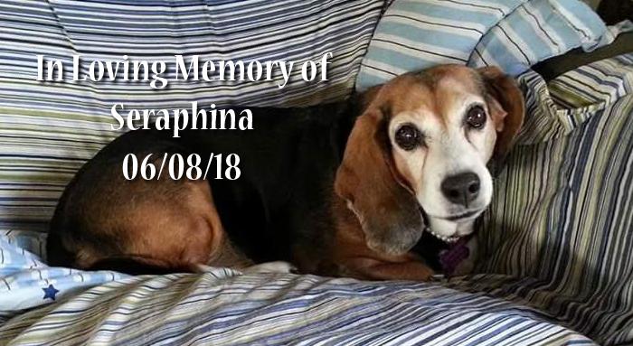 Senior Dog memorial slide