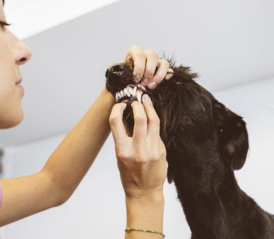 LOYAL program covers basic veterinary care