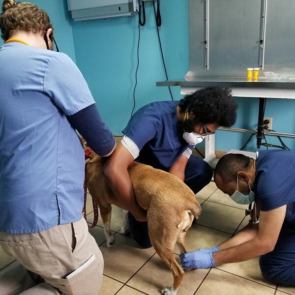 donate for the dogs medical expenses