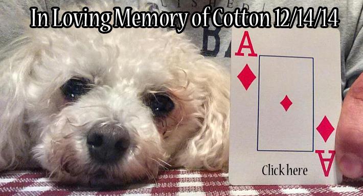 in loving memory cotton 1