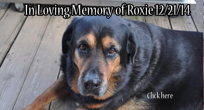 in loving memory roxie 1