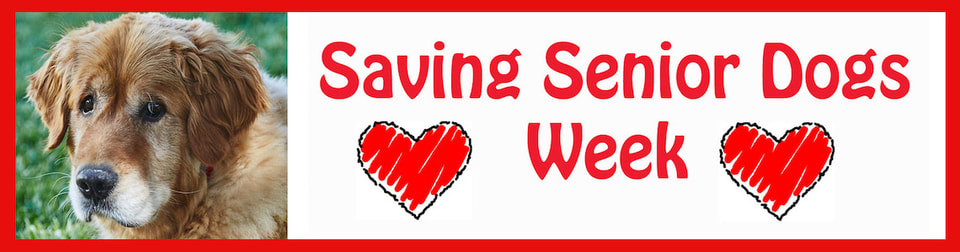 Saving Senior Dogs Week